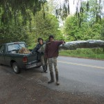 A truck full of trees to plant, mid-May