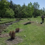 Tress and shrubs at the restoration site