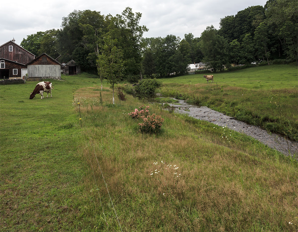 By late-July the fenced off banks are looking healthier